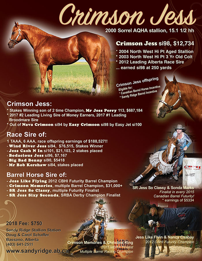 Crimson Jess - Stakes winning son of Mr Jess Perry - Standing at Sandy Ridge Stallion Station